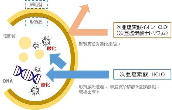 product_07.jpg